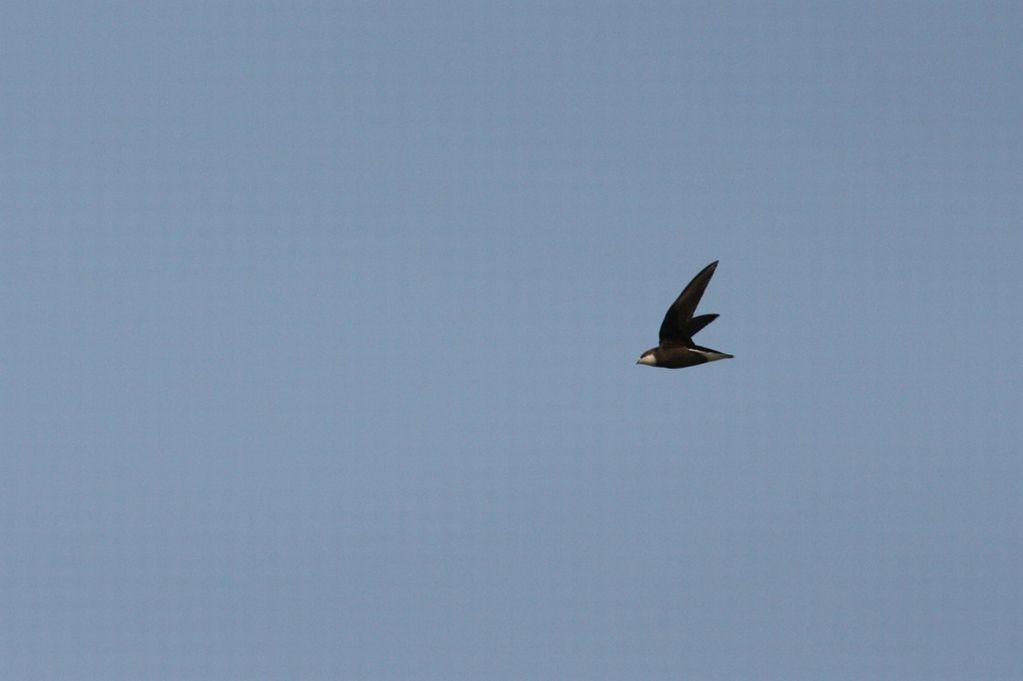 Rare bird dies after flying into wind turbine