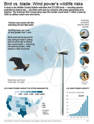 Bird vs. blade: Wind power's wildlife risks