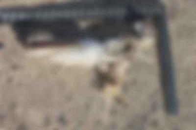 dead-hawk-blur
